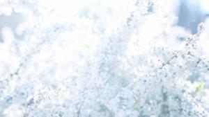 MIYAGAWATEC(宮川テック)の映像作品「YUKIYANAGI」No4